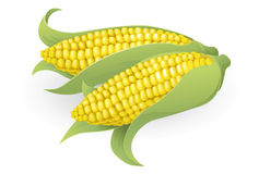 Tasty sweetcorn illustration Royalty Free Stock Photos