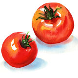 Tasty tomatoes. Watercolor painting on white background Royalty Free Stock Images