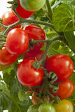 Tasty tomatoes close-up Stock Photos