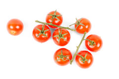 Tasty tomatoes on vine on white background Royalty Free Stock Photography