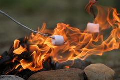 Tasty treats. Marshmallow on a stick being roasted over a camping fire Stock Image