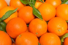 Tasty valencian oranges freshly collected Stock Photo