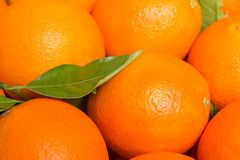Tasty valencian oranges freshly collected Royalty Free Stock Images