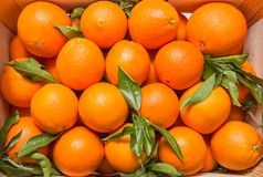 Tasty valencian oranges on a wooden box Stock Photography