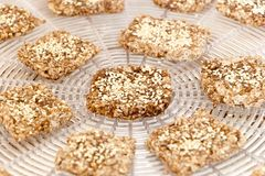 Tasty vegan cookies preparing on the dehydrator grid. Vegan cookies from wheat with wheat germ, raisins and sesame in preparing process on the dehydrator grid royalty free stock images
