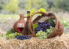 Tasty wine on wooden barrel. On grape plantation background stock photos