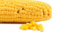 Tasty yellow ear of corn Stock Image