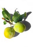 Tasty yellow plums Stock Image