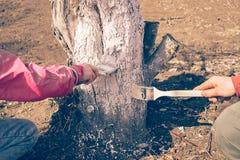Tata i c?rka bierzemy opiece drzewo pokrywa z bia?? farb? dla ochrony drzewa Praca w ogr?dzie w wiosny jesieni fotografia royalty free
