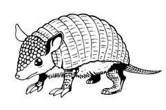 Tatou illustration stock