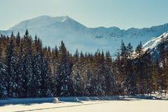 Tatra山, Koscieliska谷 库存图片