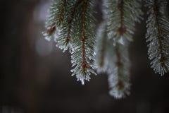 Tatra Στοκ φωτογραφίες με δικαίωμα ελεύθερης χρήσης
