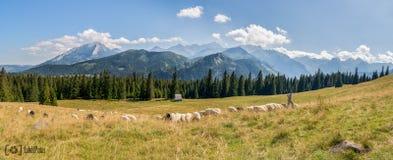 Tatra berg i Polen royaltyfri fotografi