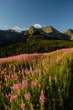 Tatra Berge Stockbilder