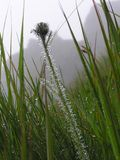 TATRA GRASS. Grass in Tatra Mountains stock photo