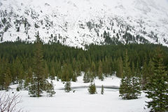 Tatra Mountain forest in winter. Frozen forest lake at Tatra mountains in winter time Royalty Free Stock Photography