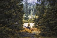 Tatra Mountains. Deer lost in the forest Royalty Free Stock Images