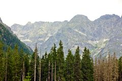Tatra Mountains Forest Stock Images