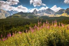 Tatra Mountains national park in Zakopane Royalty Free Stock Photos