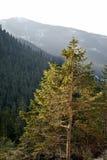 Tatra Mountains near Zakopane. Poland Royalty Free Stock Photos