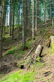 Tatra nationalpark i Zakopane fotvandra bergtrail Arkivfoton