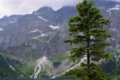 Tatra trän Arkivbild
