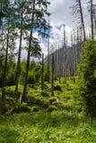 Tatra utsatte för fara Arkivbild