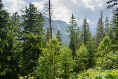 Tatra woods. Tatra National Park, Zakopane, Poland Stock Photo