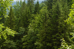 Tatra woods Royalty Free Stock Photography