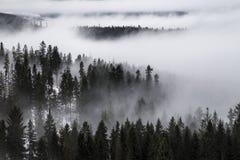 Tatrabergen in de winter, landschap Stock Foto