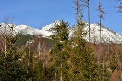 Tatranskà ¡ Lomnica滑雪胜地  库存照片