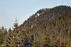 Tatras basso in Jasna slovakia fotografie stock libere da diritti