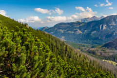 Tatras Mountains covered by green pine forests, Poland. Stock Photo