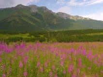 Tatras slovacco Fotografie Stock Libere da Diritti