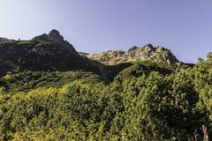 Tatras - Vysoke altos Tatry - maneira a Popradske Pleso Fotografia de Stock Royalty Free