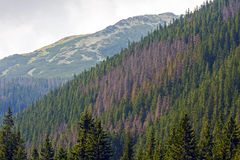 The Tatras. On the way to the mountains of the Polish Tatra mountains Stock Images