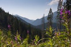 Tatrasen Arkivbilder