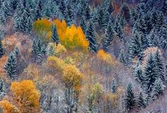 Tatry intryck Fotografering för Bildbyråer