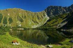 Tatry - lago de la montaña Imagen de archivo libre de regalías
