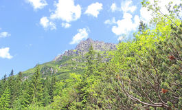 Tatry mountains, poland Royalty Free Stock Photo