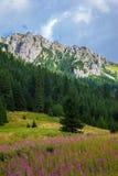 Tatrzański góra krajobraz fotografia stock