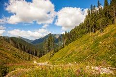 Tatrzański góra krajobraz zdjęcie stock