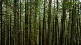 Tatrzańscy drewna Obraz Stock