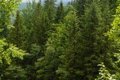 Tatrzańscy drewna Fotografia Royalty Free