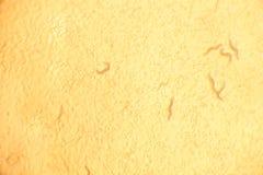Tatsächliches Mikroskopbild Stockbild