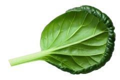 Tatsoi tatchoy zieleni liście, ścieżki Obrazy Stock