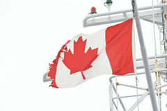 Tattered Canadian Flag Royalty Free Stock Photo