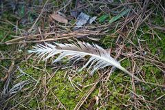 Tattered Feather. Close up of tattered feather on the ground in Petersburg Va park Royalty Free Stock Images
