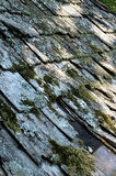Tattered Roof. Old dilapidated roof with algae growth Stock Images