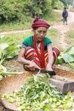 Tattoed kvinna för haka stam (Ngagah) Royaltyfri Bild